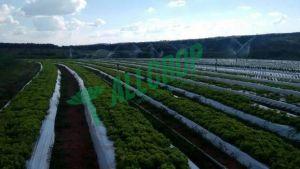 PLASTICO ALLPLAST MULCHING BRANCO/PRETO 1,80X500M 25M